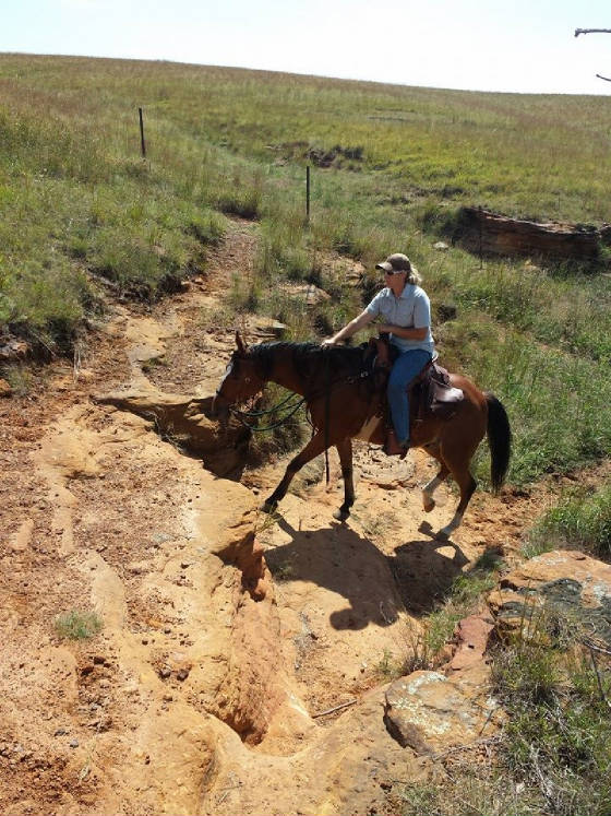 Horse and Rider climbing rocky trail