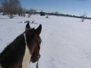 Snowy view from atop a horse